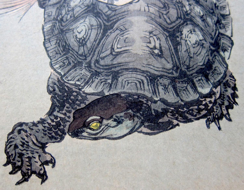 Drawn sea turtle japanese turtle Turtle photo#1 Japanese Japanese turtle