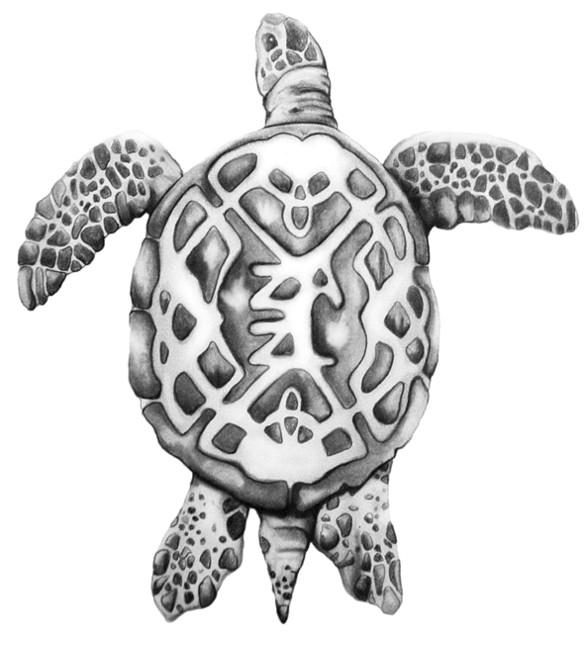 Drawn sea turtle japanese turtle Falkenhagen Turtle by Falkenhagen Celtic