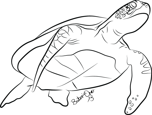Drawn sea turtle line drawing Turtle Drawings D6fk039 Full png
