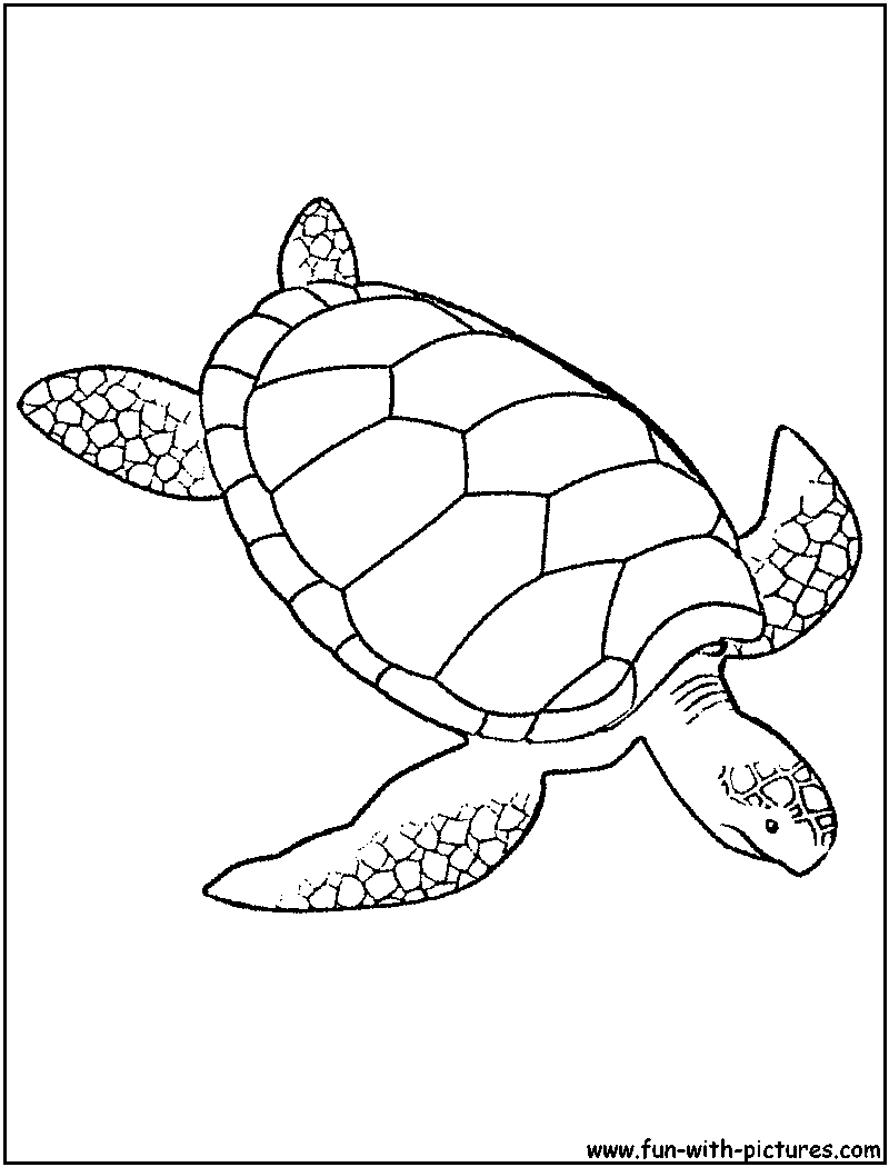 Drawn sea turtle loggerhead turtle Page  Green Coloring Sea
