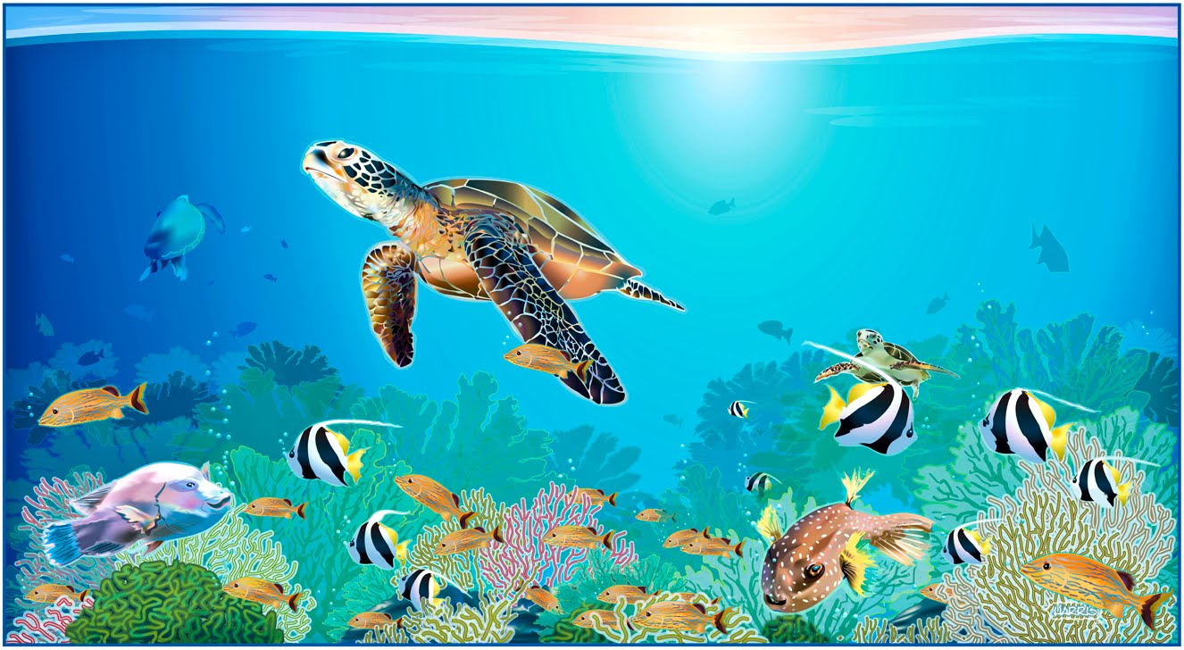 Drawn sea turtle mexico Adobe November in Draws Below