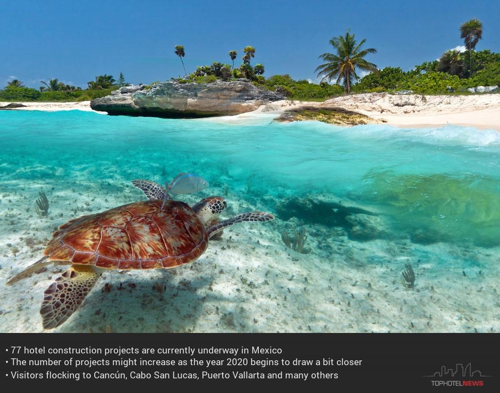 Drawn sea turtle mexico Mexico 2017 TOPHOTELNEWS Hotel Grows