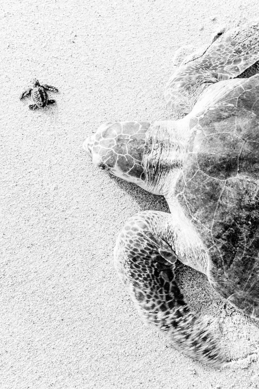 Drawn sea turtle mexico Little Ixtapilla  Overcast Brian