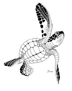 Drawn sea turtle mexico Pin Pinterest Turtle sea turtles