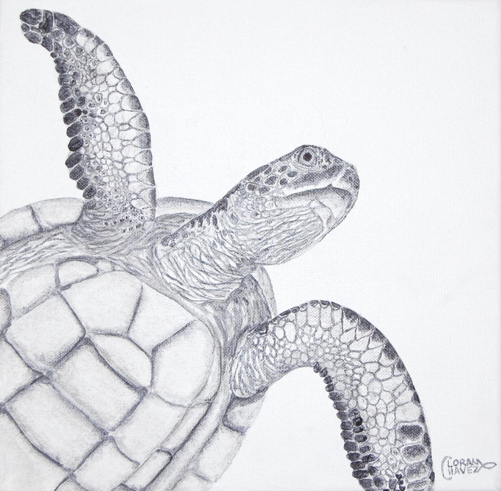 Drawn sea turtle mexico II Turtle studies Art Loran