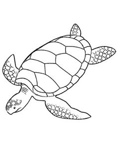 Drawn sea turtle pattern Page Coloring Page Printable Turtle