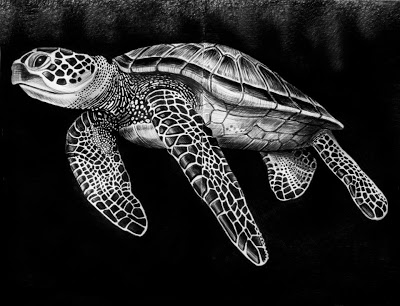Drawn sea turtle pen and ink Paper Ink Jeffs Tim Ink
