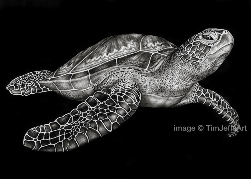 Drawn sea turtle pen and ink & Tim paper Art: on