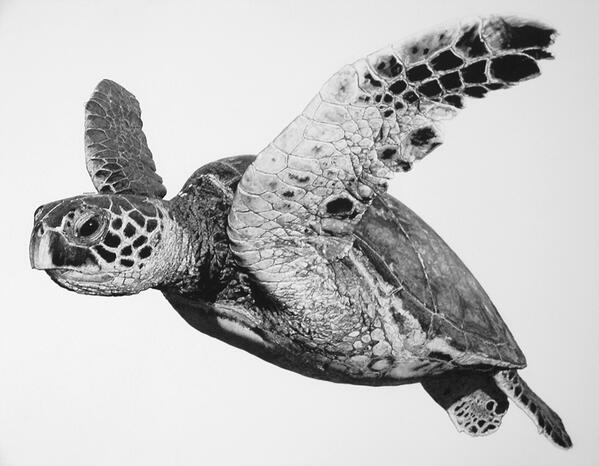 Drawn sea turtle realistic Turtle by http://t art sea