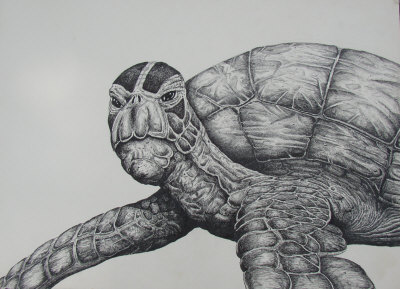 Drawn sea turtle realistic Turtle Realistic Turtle Drawing Drawing