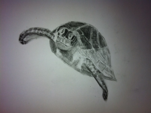 Drawn sea turtle realistic Drawing him next enjoyed the