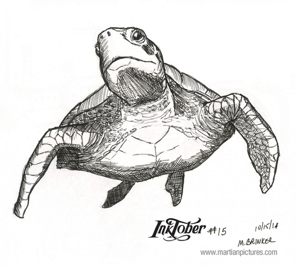 Drawn sea turtle realistic Sea Drawing Martian Drawing Turtle