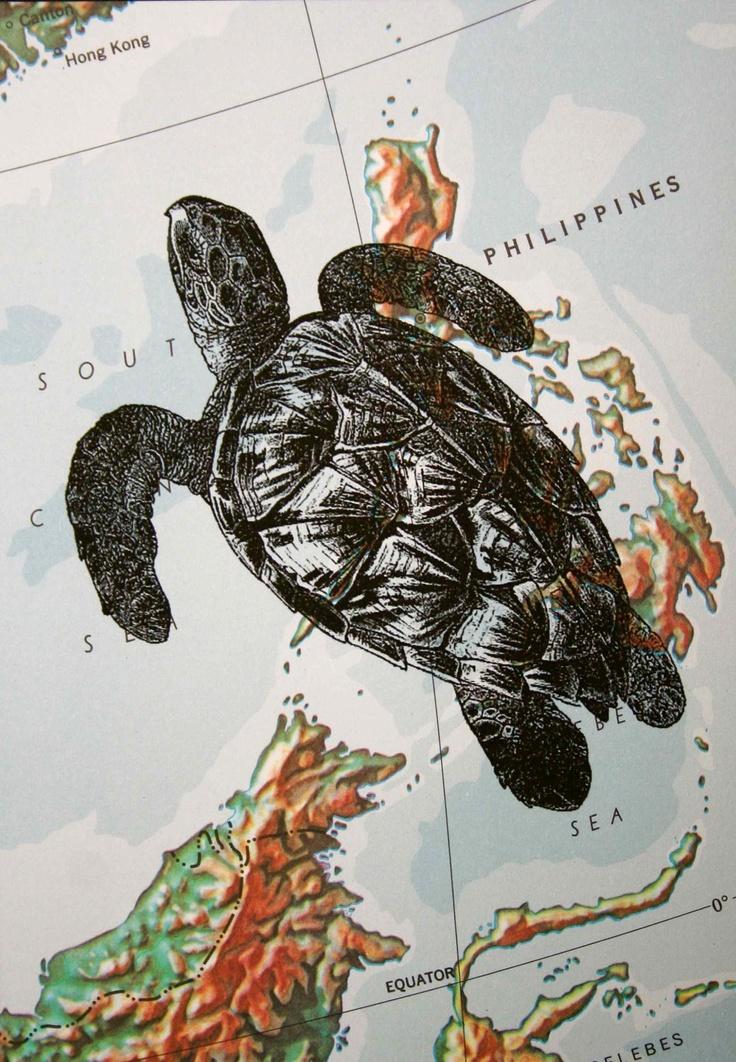 Drawn sea turtle scientific illustration X Philippines Turtle Pinterest on