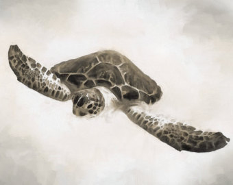 Drawn sea turtle silver dollar Turtle Turtle Sepia Sea Drawing