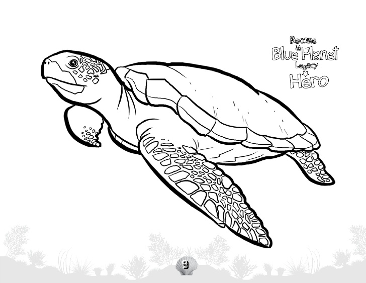 Drawn sea turtle underwate animal H C Animals W T