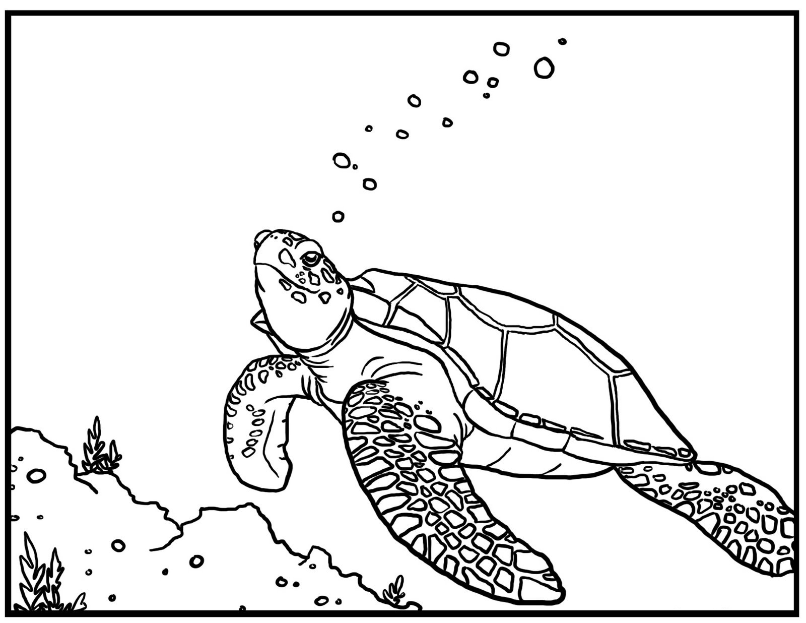Drawn sea turtle underwate animal Sea coloring pages ColoringStar underwater