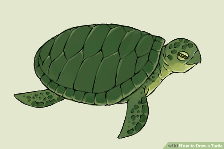 Drawn sea turtle water drawing Draw 4 a Step a