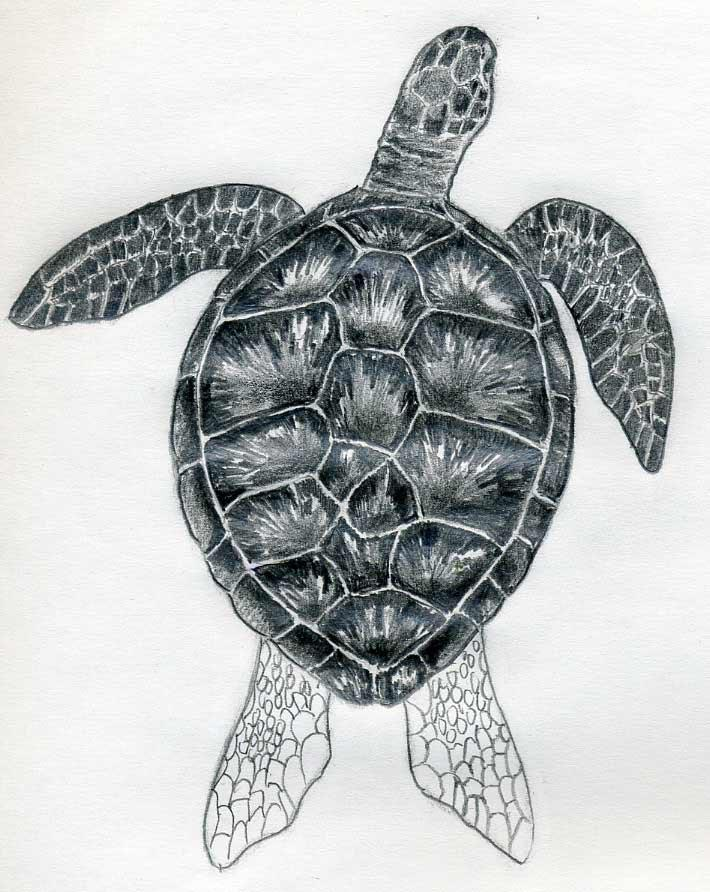 Drawn sea turtle water drawing Pin Patterns Sea Turtle Zentangle
