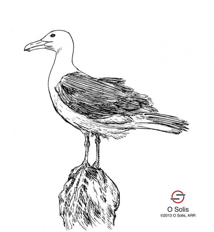 Drawn seagull gull Card I seagull after a