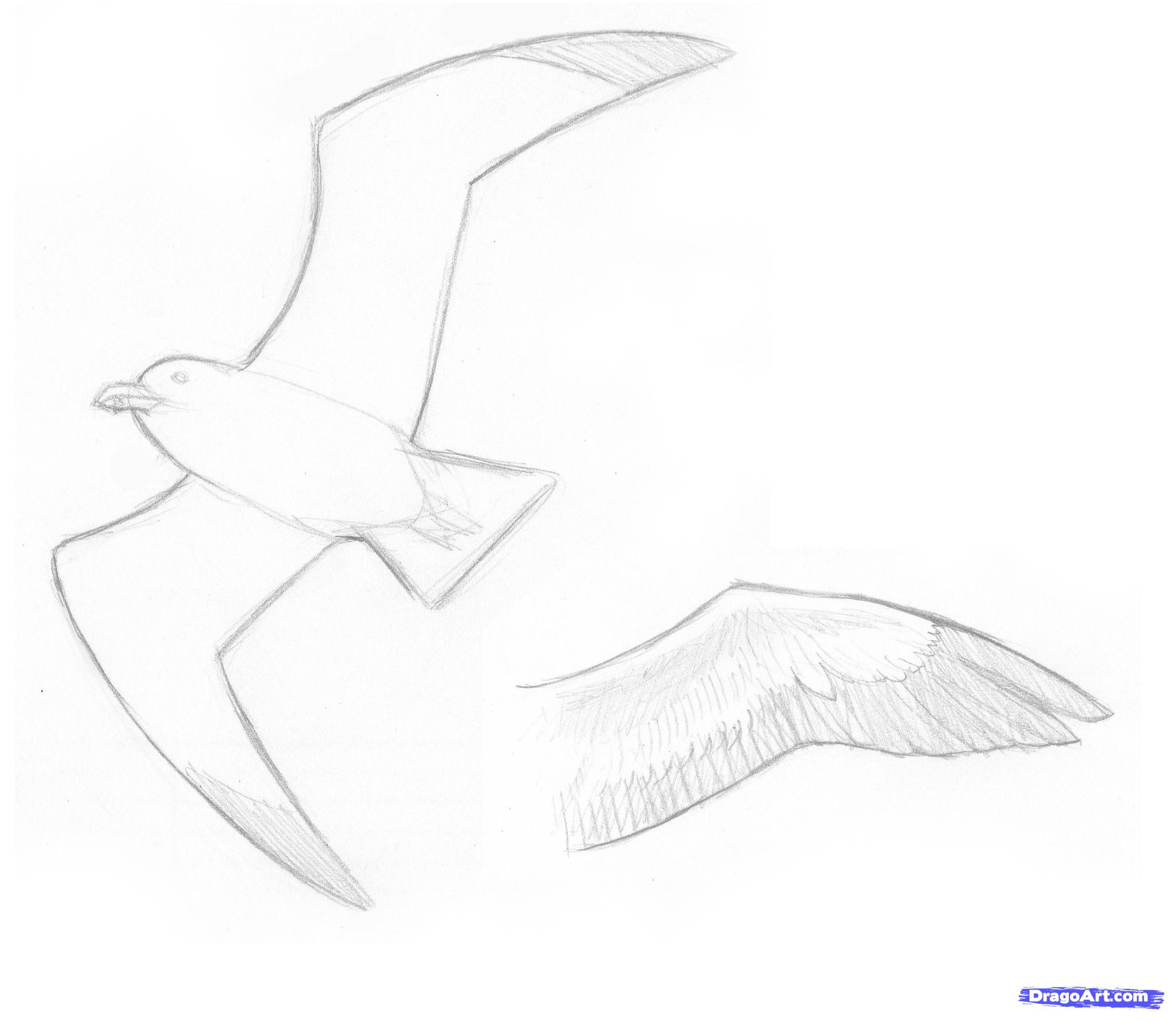Drawn seagull black and white By Animals How by