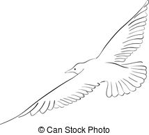 Drawn seagull gull Of white illustration on the