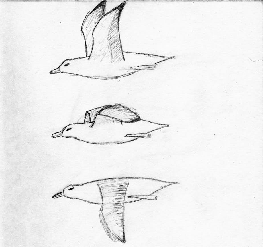 Drawn seagull seagul Discussion on Kongregate You seagull?