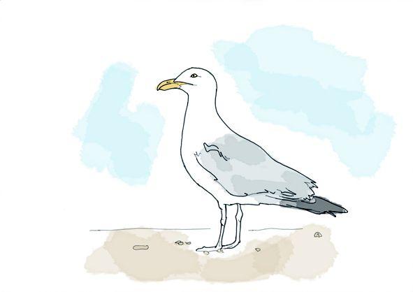 Drawn seagull Seagull Drawing Drawing Art Pencil