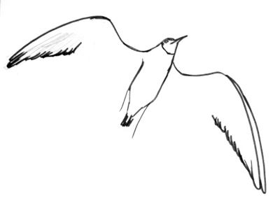 Drawn seagull black and white Flying draw gull a Seagull