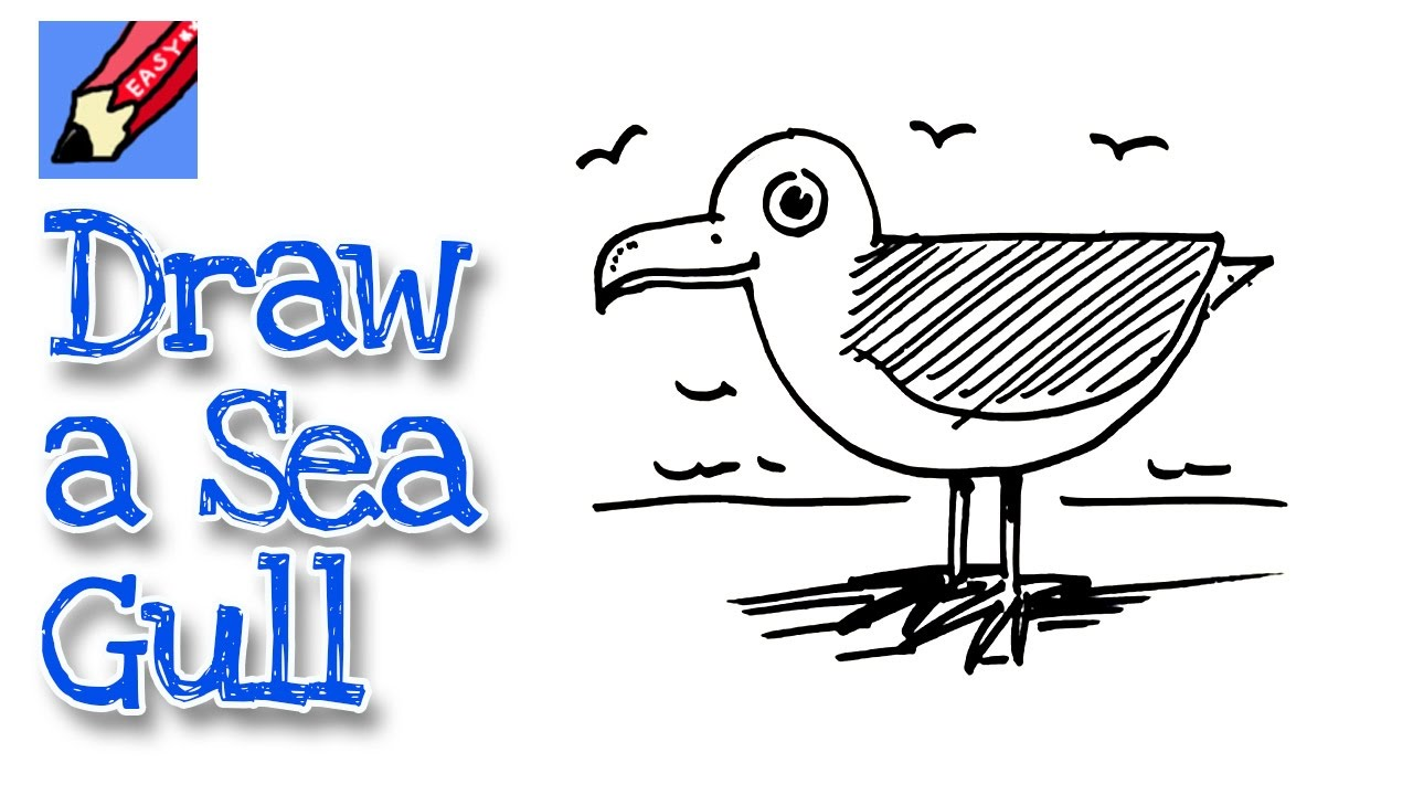 Drawn seagull cartoon Beginners YouTube Seagull How draw