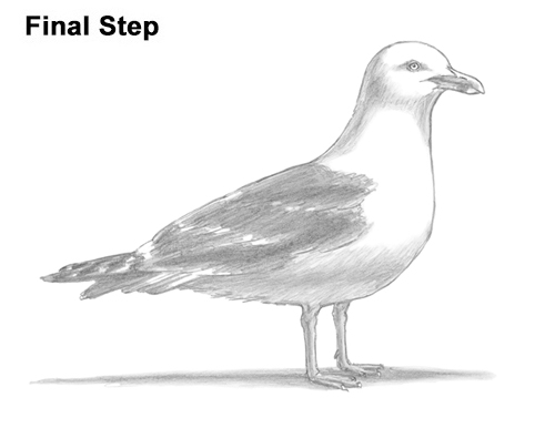 Drawn seagull gull Seagull to Standing How How