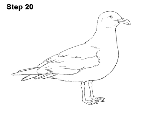 Drawn seagull gull Seagull How Standing 20 How