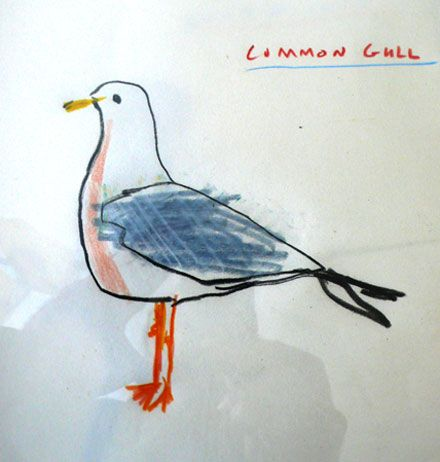 Drawn seagull herring gull Best  spice Coastal common