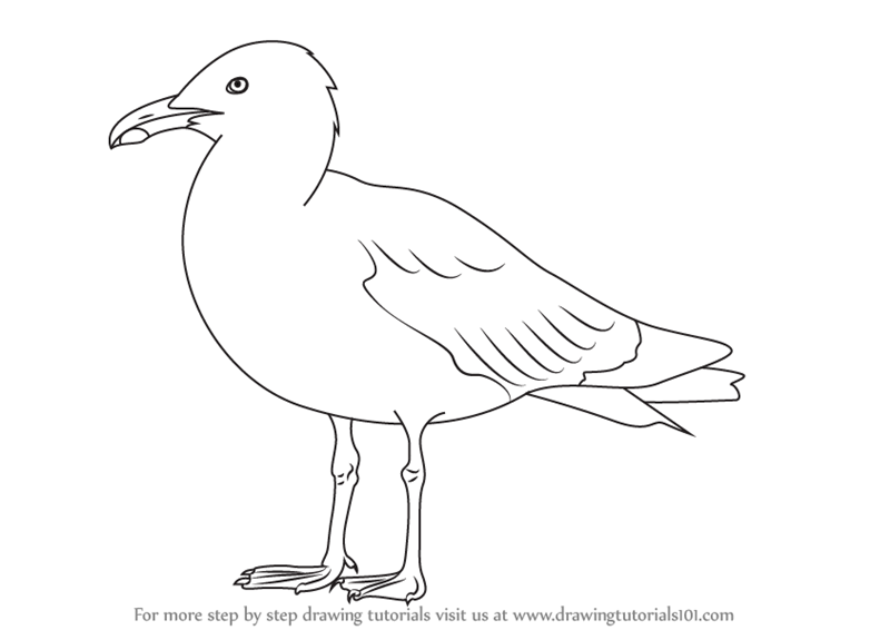 Drawn seagull herring gull Drawing Simple photo#23 seagull Seagull