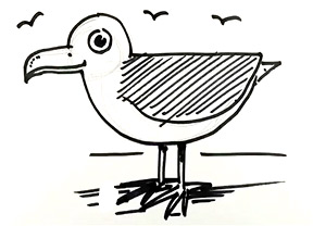 Drawn seagull herring gull Author DrawASeaGullSmall Shoo herring –
