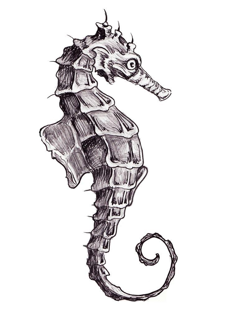 Drawn seahorse Pen  ink seahorse hand