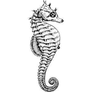 Drawn seahorse Google Tattoos drawing Pinterest drawing