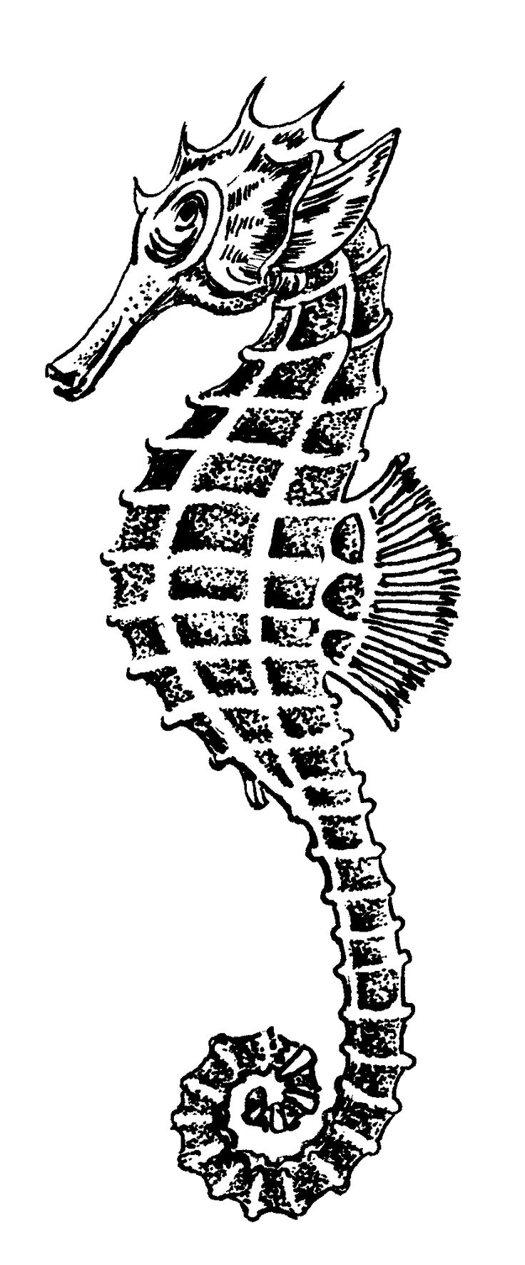 Drawn seahorse Pinterest pin on more) public