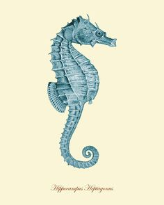 Drawn seahorse art deco Art paintings this and art