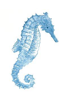 Drawn seahorse art deco Seahorse flash Pinterest Horse