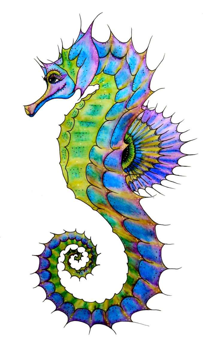 Drawn seahorse baby Ideas and Clipart Pin drawing