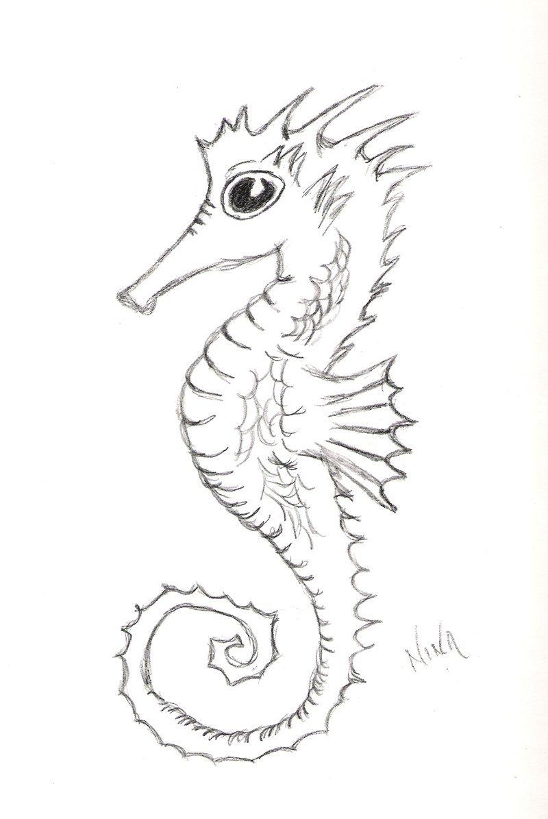 Drawn seahorse deviantart WIP by flina WIP Seahorse