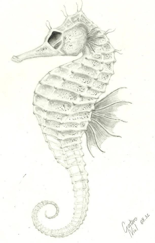Drawn seahorse deviantart The Seahorse on Seahorse DeviantArt