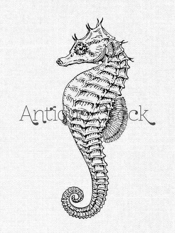 Drawn seahorse fish Life Seahorse Sea Fish Drawing