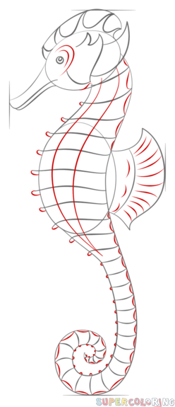 Drawn seahorse line drawing Realistic seahorse to a draw