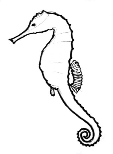 Drawn seahorse line drawing Horse line horse a drawing