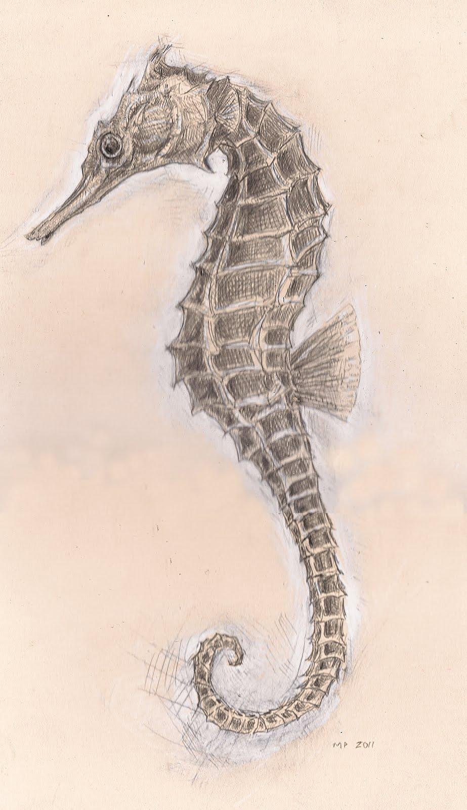 Drawn seahorse realistic  Beautiful seahorse realistic Sahara