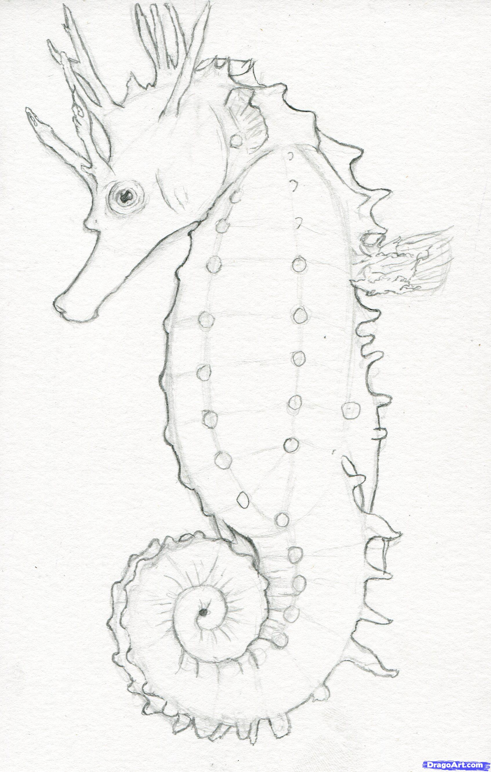 Drawn seahorse realistic Draw How to how realistic