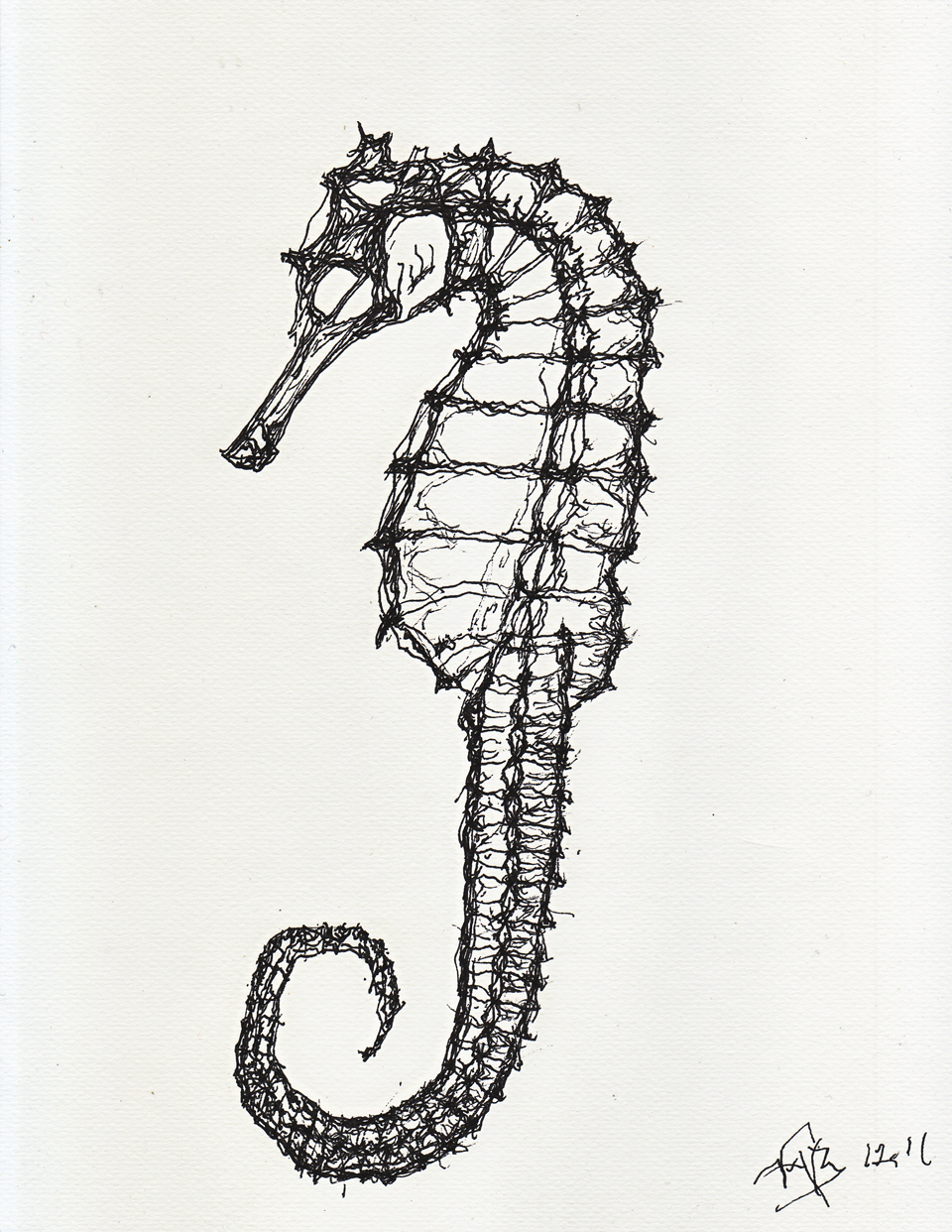Drawn seahorse skeleton Sources Google seahorse skeleton Search