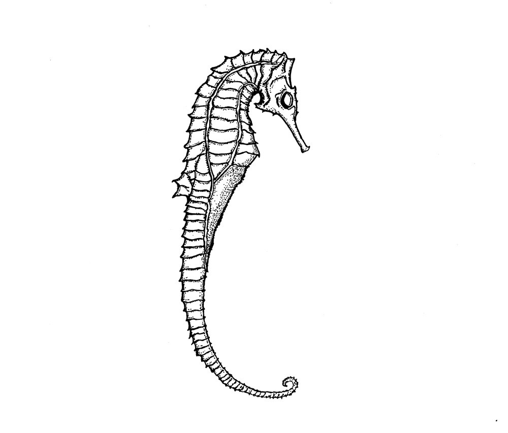 Drawn seahorse skeleton Item? Skeleton this Seahorse Like