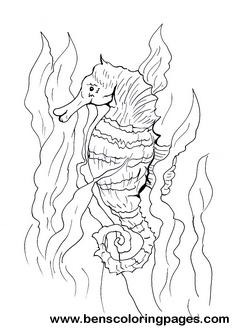 Drawn seahorse vector Sea Sea free horse coloring